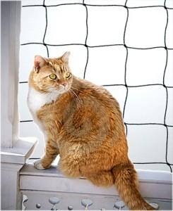 Cat Netting illustration on balcony.