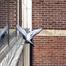 birdspikes-1